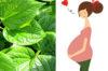 Bà bầu có nên ăn lá lốt không? Ăn nhiều có ảnh hưởng tới thai nhi