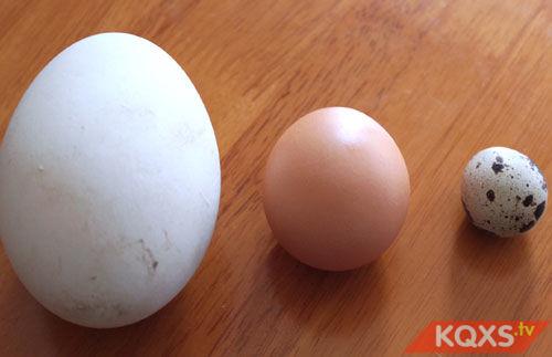 Bà bầu ăn trứng ngỗng sinh con có thông minh không?