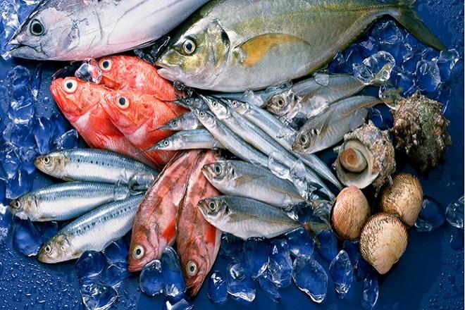 Các loại cá ở biển có hàm lượng thủy ngân cao