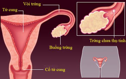 Các giai đoạn của quá trình thụ thai và mang thai phát triển đầy đủ 42 tuần