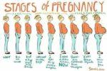 Cách tính tuổi thai nhi chính xác nhất