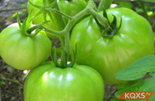 Tác dụng của cà chua đối với bà bầu & những điều cần lưu ý