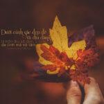 Những câu nói stt hay về mùa thu và tình yêu được yêu thích nhất