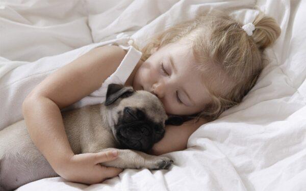 giống chó cảnh hiền lành sạch sẽ nên nuôi trong nhà có em bé loài chó pug mặt xệ