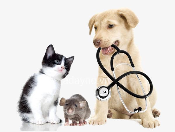 chích ngừa cho mèo giúp tăng khả năng miễn dịch
