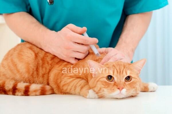 tiêm phòng cho mèo còn dựa vào tình trạng sức khỏe của bé