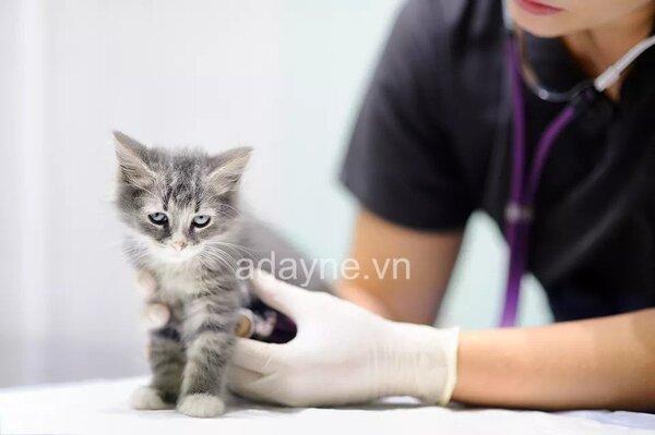 vacxin phòng 4 bệnh cho mèo gồm ngừa những bệnh thường gặp
