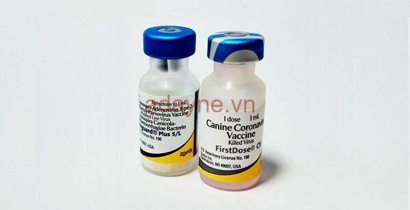 vacxin 7 bệnh cho chó của Mỹ phòng bệnh parvo cao