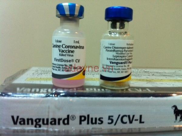 Vacxin phòng 7 bệnh cho chó ngừa thêm bệnh corona