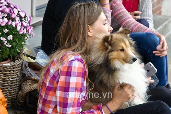 'Chó Collie ăn gì? là câu hỏi rất thường gặp khi chăm sóc giống chó này