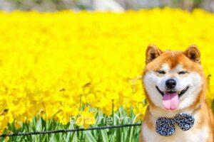 'Rụng tim' trước 6 giống chó cute, xinh xắn nhất thế giới