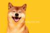 Chó Shiba giá bao nhiêu tiền ?Giá chó Shiba phân loại theo nguồn gốc?