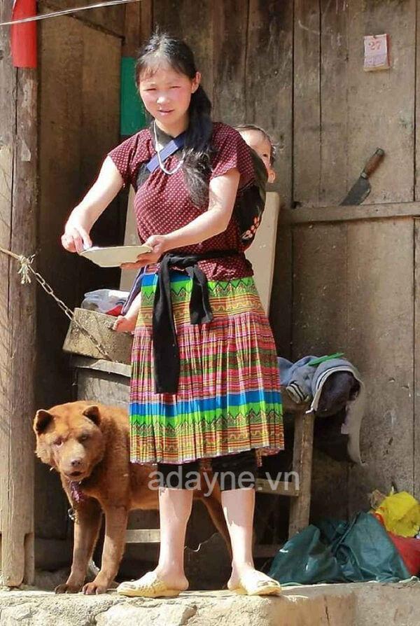 Mông cộc là loài chó bản địa lai với chó sói rừng.