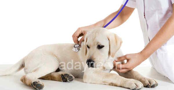 Có rất nhiều tác hại nếu chó không được tẩy giun